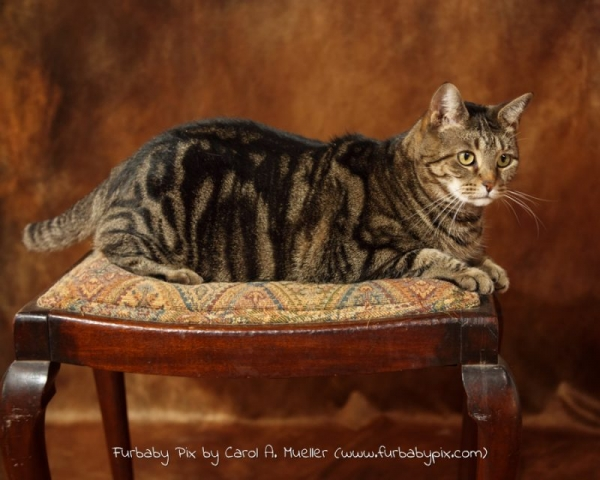 tabby cat photo furbaby pix cat photographer Jacksonville Florida