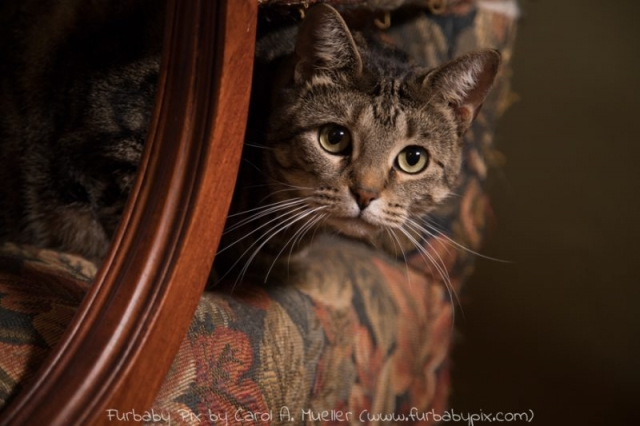 tabby green background furbaby pix cat photograph in Jacksonville Florida